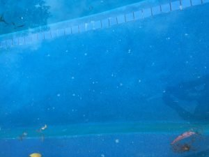 Calcium Stains in Swimming Pools The Pool Stain Removers 2